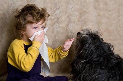 Cần quan tâm đến chủ đề nuôi thú nuôi nếu bé bị dị ứng